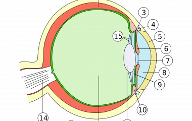 The game Human eye anatomy